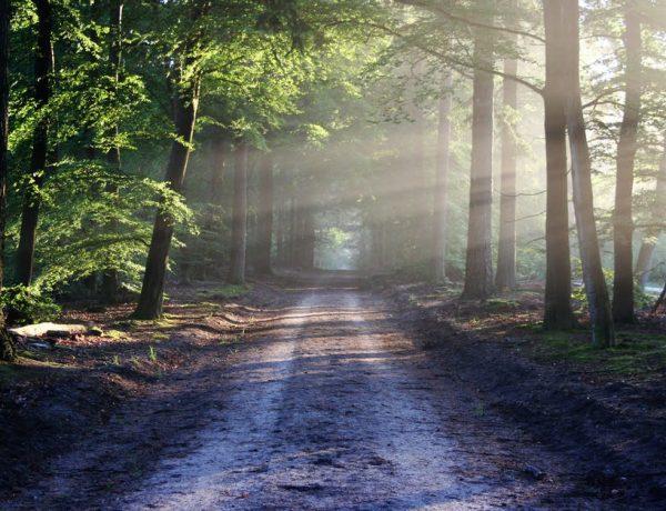 Hoe een natuurlijke omgeving je meer rust kan bieden