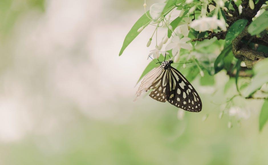 Oordeelvrij zijn: leef een lichter en liefdevol leven